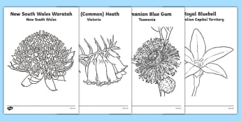 Australian States and Territories Floral Emblems Colouring Sheets - australia, floral emblems, flowers, Australian natives, states, territories, New South Wales, Victoria, Queensland, South Australia, Tasmania, Western Australia, Northern Territory,