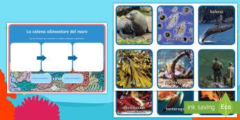 La catena alimentare in fondo al mare Attività - scienze, animali, oceano, cibo, preda, pesci, italiano, italian, mare, estate, materiale, scoplastic