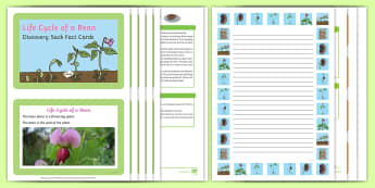 Life Cycle of a Bean Discovery Sack - EYFS, Early Years, KS1, beans, plants, growing, life cycle, seeds, beanstalk, science, Understanding the World