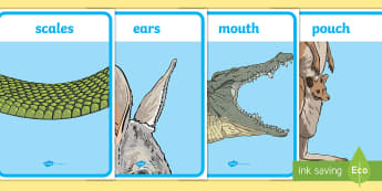 Australian Animal Parts Vocabulary Display Posters - animals structure, animal features, ACSSU017, external features, australian fauna,Australia