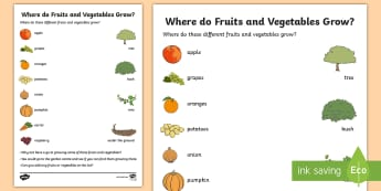 Where Do Fruits and Vegetables Grow? Activity Sheet - gardening, growing, food, outdoor, holiday, Worksheet