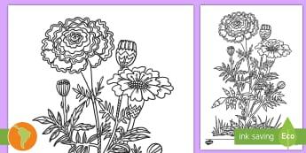 Hola de colorear: Flor de Cálendula del Día de los Muertos - Día de los muertos, flor del día de los muertos, flor para colorear, ficha de colorear, actividad