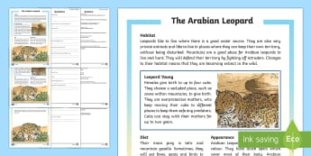 Arabian Leopard Differentiated Reading Comprehension Activity - Science: Living World, falcon, leopard, reading, comprehension, fact file, activity sheet, Arabian a