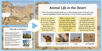 The Arabian Desert PowerPoint - Science: Living World, Arabian, desert, UAE, animals, plants.
