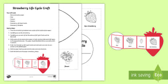 Strawberry Life Cycle Craft Instructions - strawberries, strawberry plants, strawberry farming, strawberry picking, strawberry plant life cycle