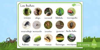 Tapiz de vocabulario: Los bichos en fotos  - libélula, abeja, caracol, hormiga, típula, escarabajo, mariposa, oruga, gusano, mariquita, cochini