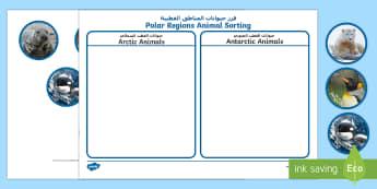 Polar Regions Animal Sorting Activity English/Arabic - The Arctic, Polar Regions, north pole, south pole, explorers, orca, whale, penguin, polar bear, anta
