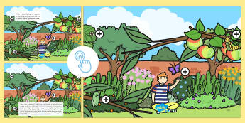 Life Cycle of a Butterfly Picture Hotspots - EYFS, Early Years, Life Cycle of a Butterfly, insect, minibeasts, life cycle, butterfly, caterpillar, Twinkl Go, twinkl go, TwinklGo, twinklgo
