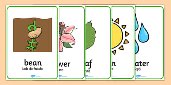 Plant and Growth Word Posters Romanian Translation - romanian, plant, growth, word, posters