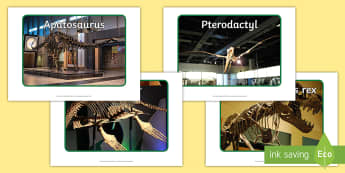 Dinosaur Skeletons Display Photos - Dinosaurs, prehistoric, skeletons, bones, display