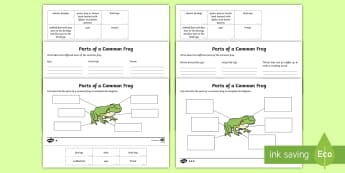 Parts of a Frog Differentiated Activity Sheet - worksheet, KS1 Science Curriculum Aims, science, year 1, animal, structure, body, part, identify, de