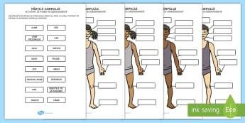 Părțile corpului - Activitate de punere în corespondență - corpul uman, stiințe, lumea vie, omul, română, materiale, partile corpului, părțile corpului, c