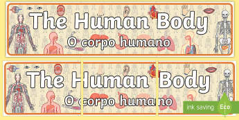 The Human Body Display Banner English/Portuguese  - ourselves, body, science, header, sceince, oursleves, ourselvs, abnner, scince, Sience, scienec, sce