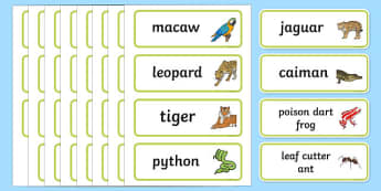 Rainforest Explorer Role Play Word Cards - rainforest, explorer, role play, word cards, cards, flashcards, binoculars, camera, snake, forest, ecosystem, rain, humid, parrot, monkey, gorilla