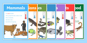 Animal Groups Display Posters - Animal, Display, Display Poster, Poster, Animal Poster, Animal Display, Animal Groups Poster, Animal Groups