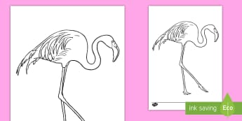 Flamingo Colouring Page - africa, african, birds, pink bird, watering hole