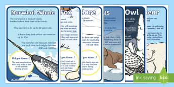 Arctic Animal Display Facts Posters - The Arctic, Polar Regions, north pole, south pole, explorers