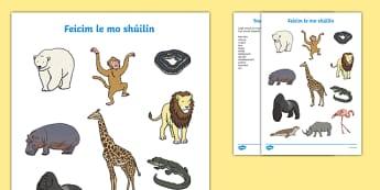 Feicim le mo Shúilín, An Zú Activity Sheet, worksheet