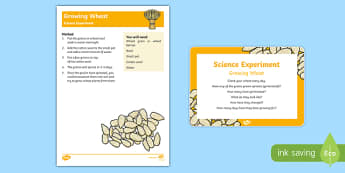 EYFS Growing Wheat Science Experiment and Prompt Card Pack