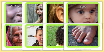 Parts of the Body Photo Pack - pictures, images, information, visual aid, group, science, nature, people, legs, arms, head, photographs, ks1, ks2
