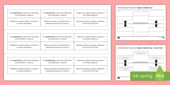 Controlling Body Temperature Negative Feedback Loop Sequencing Cards - Sequencing Cards, gcse, biology, negative feedback, negative feedback loop, negative feedback system