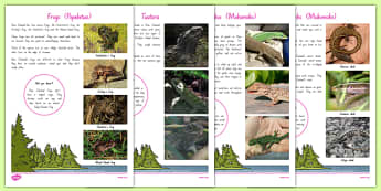 New Zealand Native Reptiles and Frogs Fact File - nz, New Zealand, animals, native, frogs, lizards, tuatara, gecko, skink, factfiles