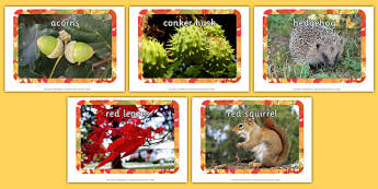 Autumn Display Photos - Display Posters, Autumn, seasons,  A4, display, autumn pictures, autumn display, leaves, acorn, conker, atumn