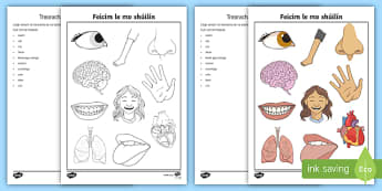 Parts of the Body I Spy Activity Sheet Gaeilge