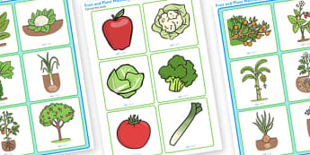 Fruit and Plant Matching Cards to Support Teaching on Jasper's Beanstalk - jaspers beanstalk, fruit, plants, matching cards, matching, matching games, matching puzzle