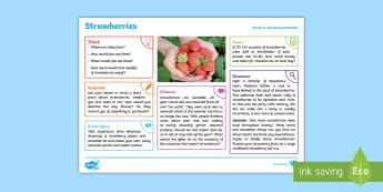 Summer: Strawberries KS2 Exploration Sheet - summer, strawberries, sunshine, seasonal, fruit, KS2, Imagine (KS2)