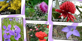 Flowers Display Photos - flowers, photos, plants, display photos