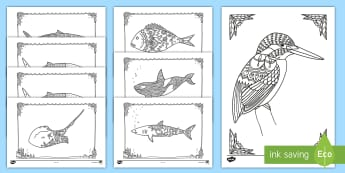 New Zealand Native Sea Creatures Mindfulness Colouring Pack - New Zealand Mindfulness, colouring, kookaburra, whale, shark.