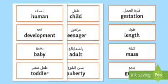 Animals Including Humans Scientific Vocabulary Cards Arabic/English - Year 5, Animals, Human, Science, Vocabulary, Cards, aniamls, animals,human,EAL,Arabic-translation