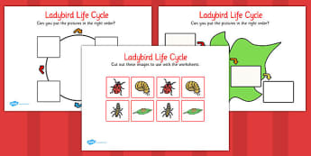 Ladybird Life Cycle Worksheets - KS1 Life Process Activities