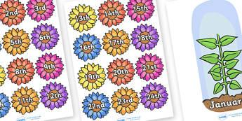 Flower Calendar - Calendar, flower, dates, months, daily routines