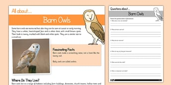 Barn Owls Reading Comprehension - barn owl, reading comprehension