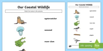 Our Coastal Wildlife Match and Draw - Science Week, 10/03/17, sea, ocean, coast, World Around Us, animals.