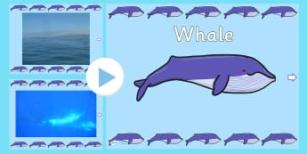Under the Sea Whale Video PowerPoint - under the sea, whale, whales, whale videos, whale powerpoint, under the sea videos, under the sea powerpoint