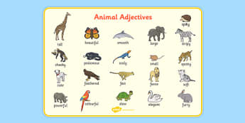 Animal Adjectives Word Mat - animal adjectives, word mat, word, mat, animal, adjectives