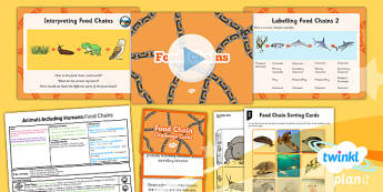 Science: Animals Including Humans: Food Chains Year 4 Lesson Pack 6
