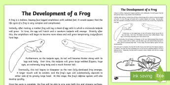 The Development of a Frog Explanation Writing Sample-Australia - literacy, explanations, writing, text types, types of text, writing sample, year 3, year 4, stage tw