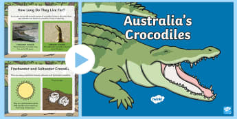 Australia's Crocodiles PowerPoint - Australian Animals, reptiles, cloze passages, activity sheets, word search, research, fast finisher,