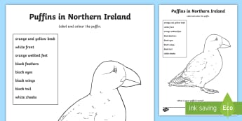Puffin Colouring Page - Science Week, 10/03/17, Puffin, label, coast wildlife, north coast, World Around Us, Literacy.