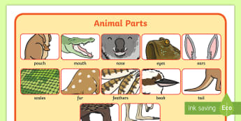 Animal Parts Word Mat - ACSSU017, external features, body parts, Animal structure, animal function ,Australia