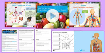 Unit 4.2: The Digestive System Cover Lesson Pack - Unit 4.2, cells, tissues, organs, system, organism, digestion, stomach, intestine