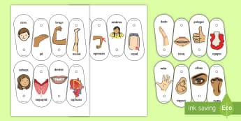 Partes do corpo, leques de comunicação - partes do corpo, corpo, corpos, fisionomia, biologia, ciencia, anatomia