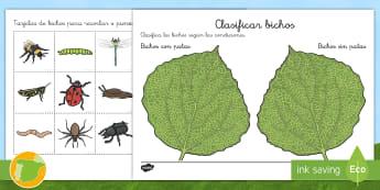 Ficha de actividad: Clasificar bichos - Con y sin patas - bichos, insectos, patas, tipos de insectos, tipos de bicho, características de insectos,caracterís