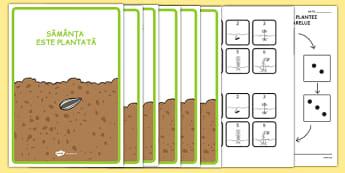 Ciclul de viață al plantei de floarea soarelui - Pachet cu materiale