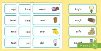 Five Senses Word Cards - Identifying Connections, ELA, Kindergarten, Common Core