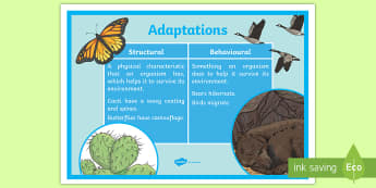 Structural and Behavioural Adaptations Display Poster - ACSSU043, Animal behavior, Adaptation, ACSSU073, Evolution,Australia